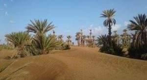 excursion désert Mhamid
