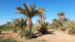 excursion désert Zagora