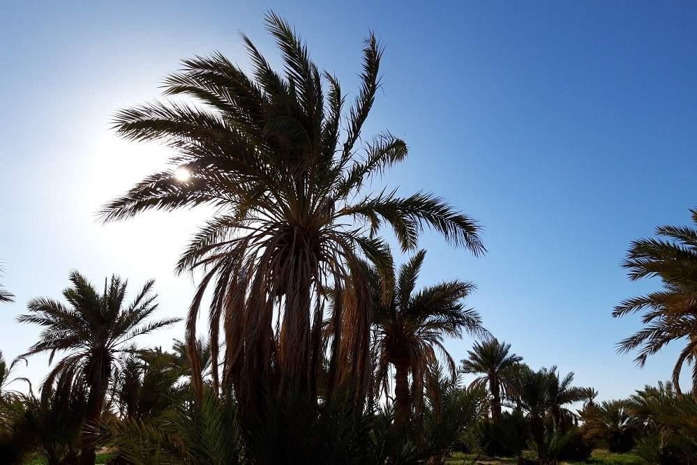 excursion Sahara Maroc M'hamid