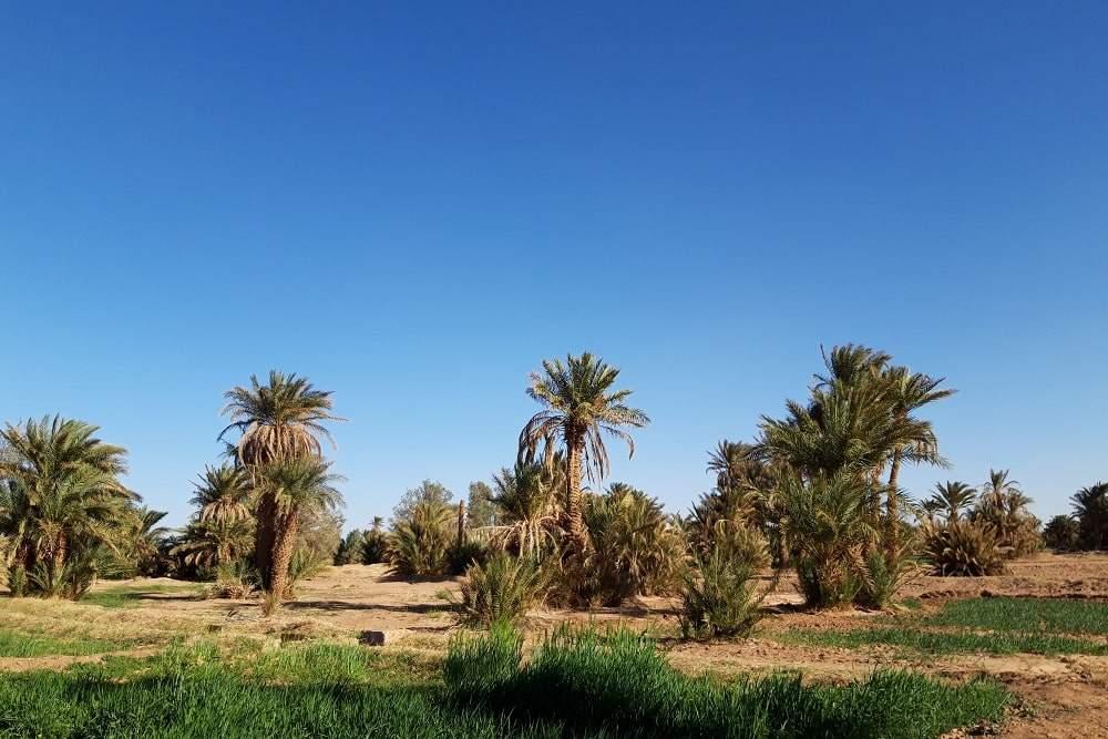 excursion désert Maroc M'hamid
