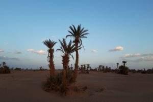 excursion Sahara Maroc