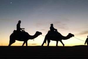 excursion dromadaires sud maroc