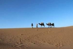excursion chameaux désert marocain