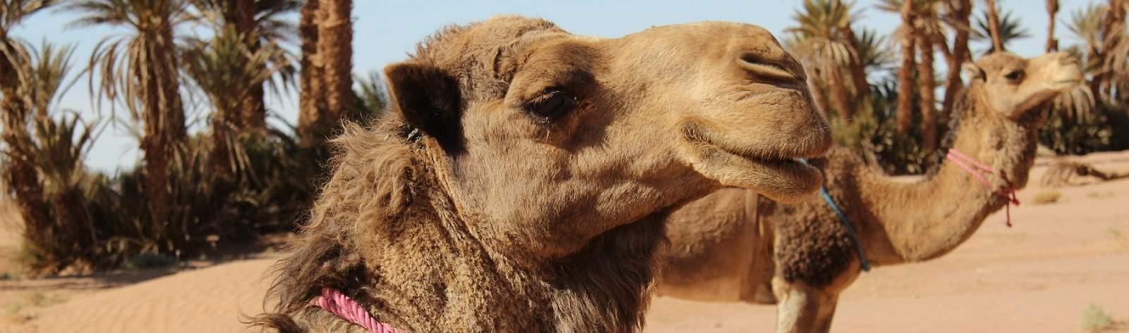 Excursions désert Marrakech