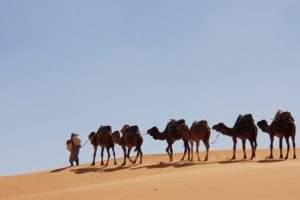 excursion Sahara Maroc dromadaires