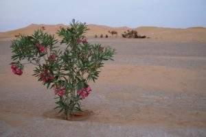 excursion Maroc Sahara