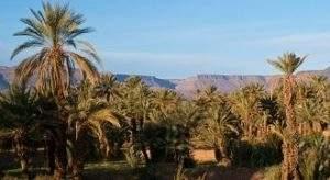 excursion desert Ouarzazate