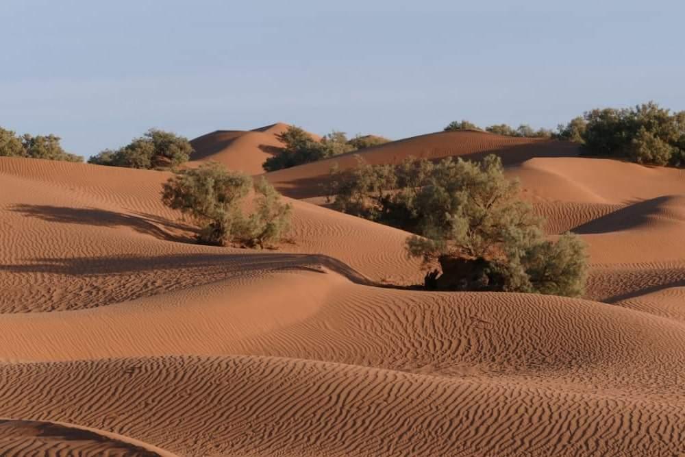 excursion désert marocain