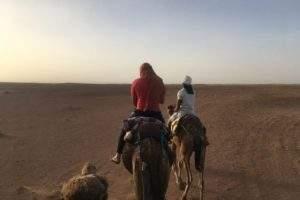 excursion désert maroc dromadaires
