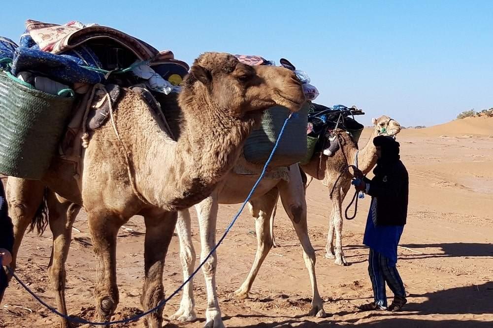 randonnée désert marocain