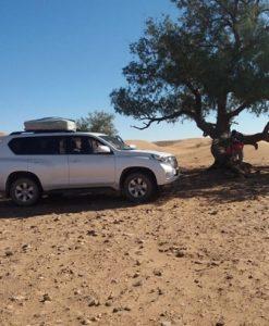 Morocco desert tours best time