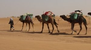 Morocco desert trek