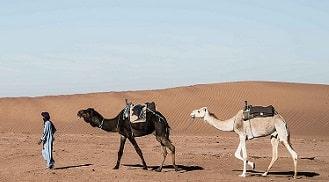 Marrakech to Merzouga tour