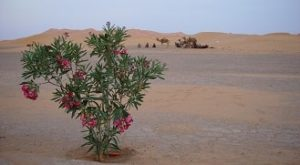 Agadir desert excursion tours