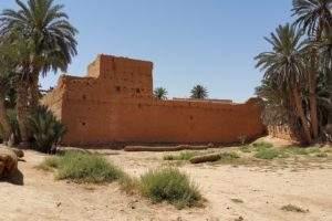 Ouarzazate Oasis